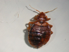 BED BUG PST OF THE MONTH